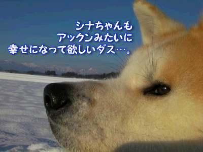 aki_20110106185030.jpg