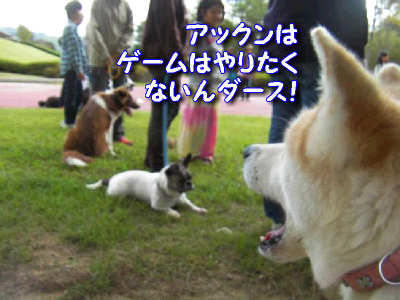 aki_20111018190044.png