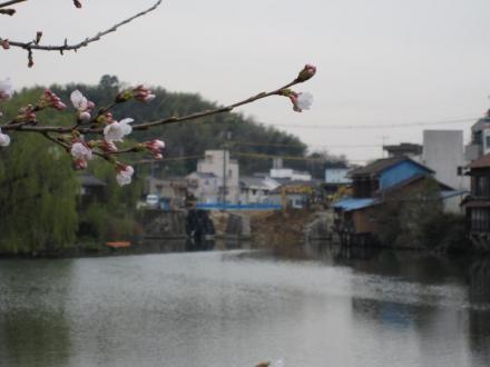 港橋北側工事20100331遠景~桜