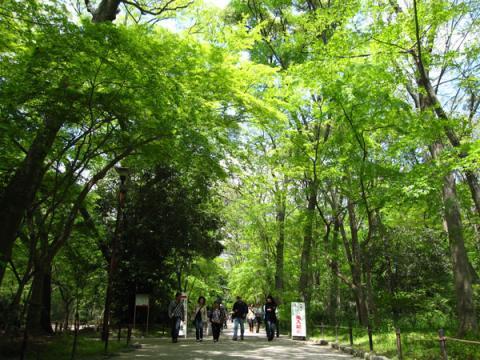 下鴨神社20100501-1