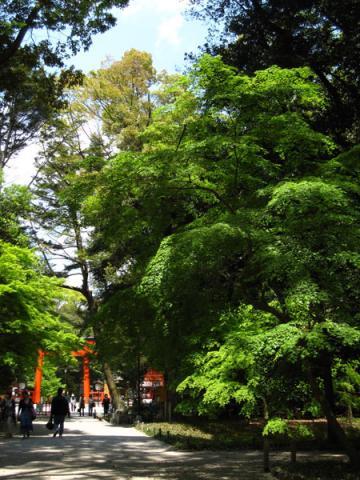 下鴨神社20100501-3