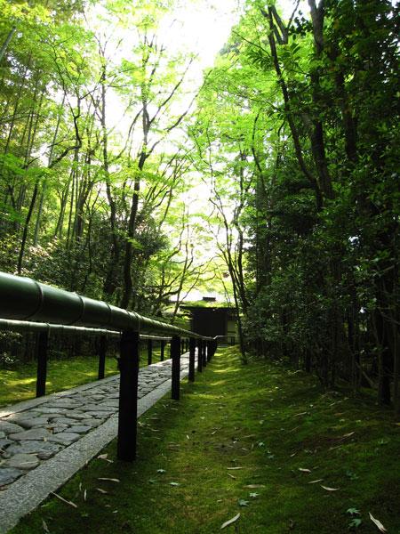 大徳寺高桐院20100525-2