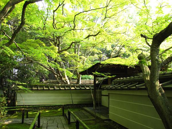 大徳寺高桐院20100525-3