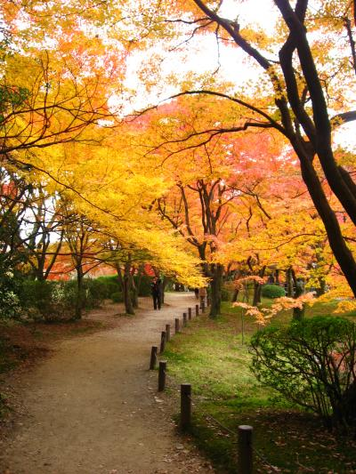 府立植物園20071128①