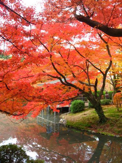 府立植物園20071128②