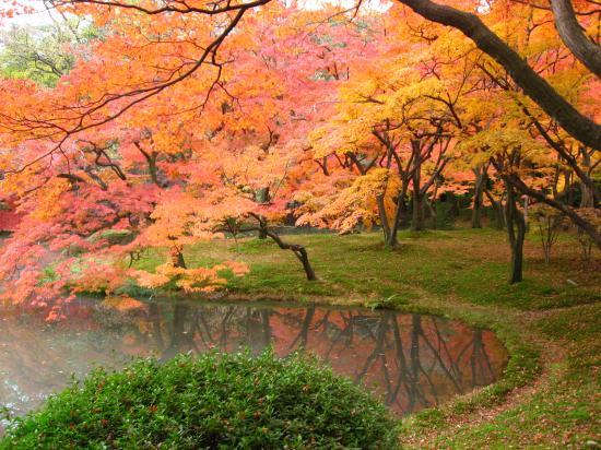 府立植物園20071128③