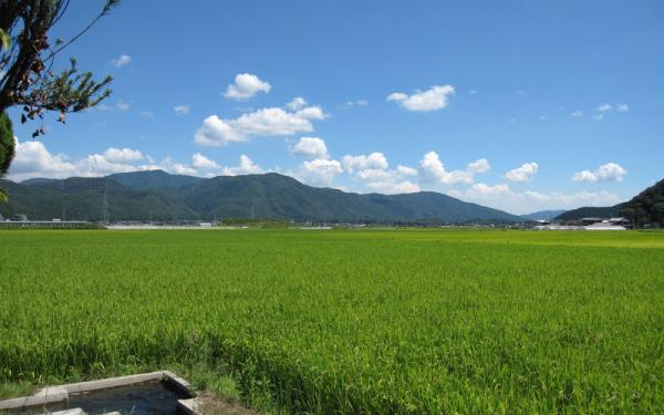 20100831nantan-yagi-gorintou