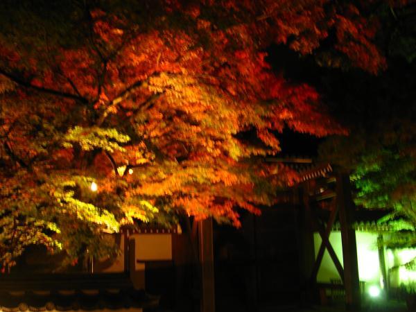 永観堂2008ライトアップ