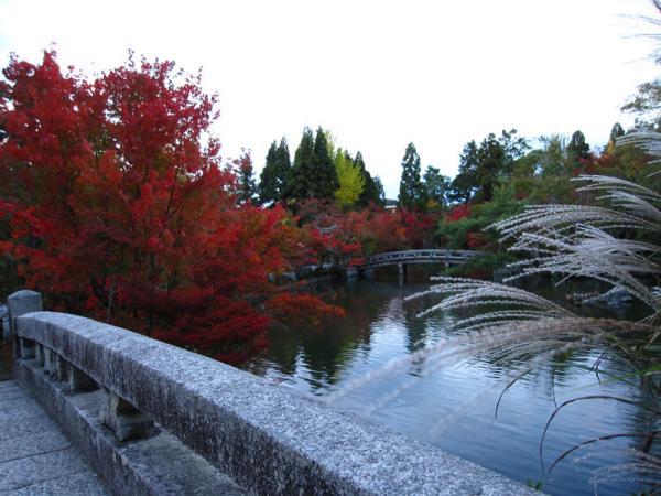 永観堂20101109-2