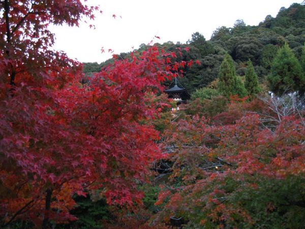 永観堂20101109-3