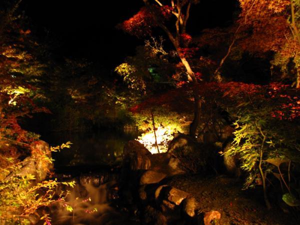 永観堂20101109-4