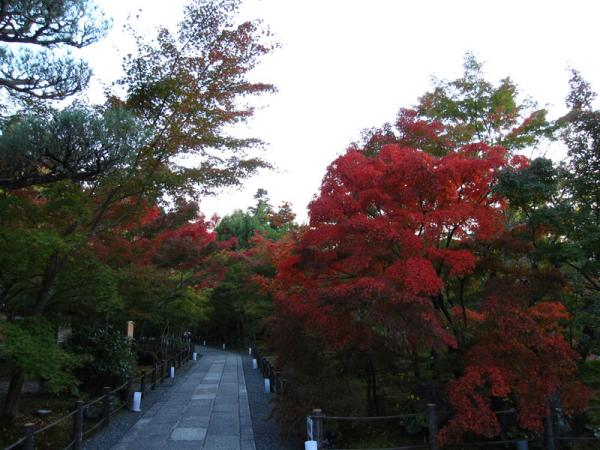 永観堂20101110-1