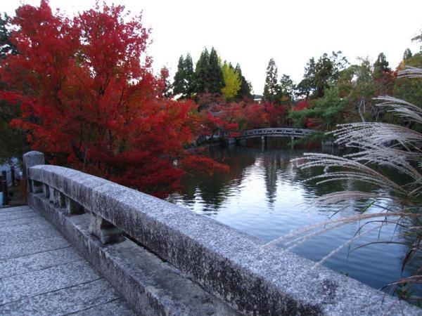 永観堂20101110-2