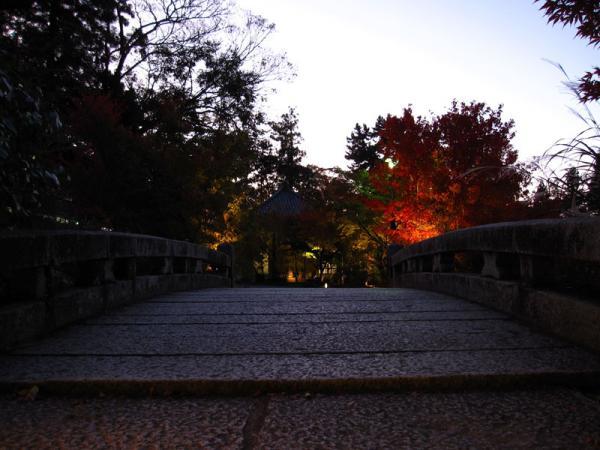 永観堂20101110-3