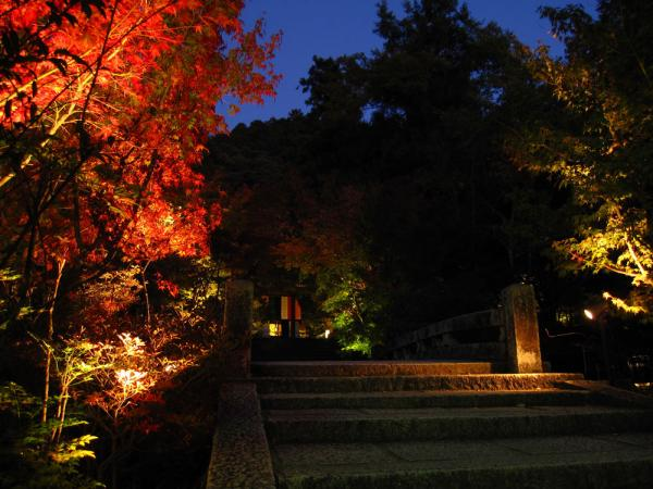 永観堂20101110-4