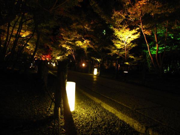 永観堂20101110-5
