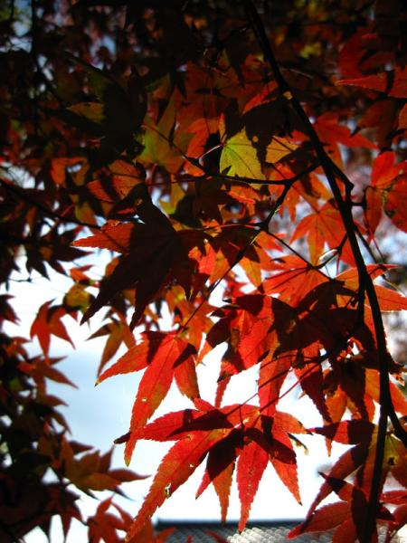 松ヶ崎大黒天20101120-2