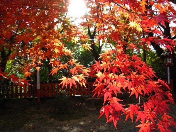 松ヶ崎大黒天20101120-7