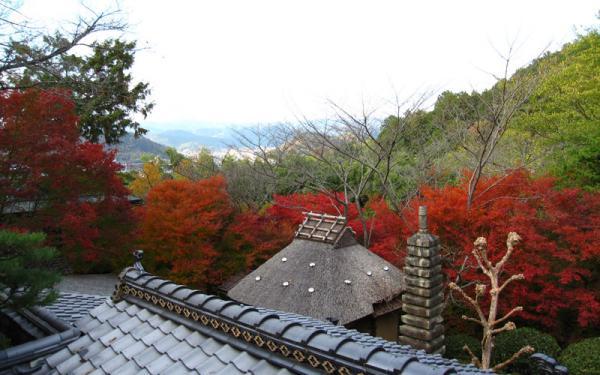 野仏庵20101120-7