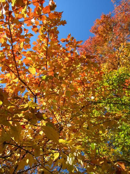 京都府立植物園20101121-1