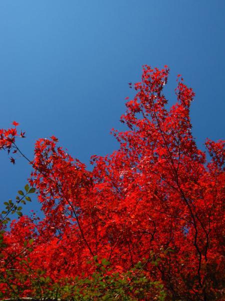 京都府立植物園20101121-2