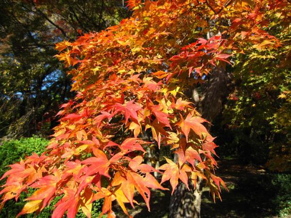 京都府立植物園20101121-3