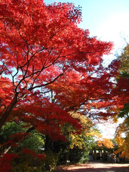 京都府立植物園20101121-4