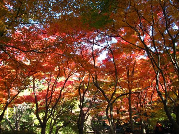 京都府立植物園20101121-5
