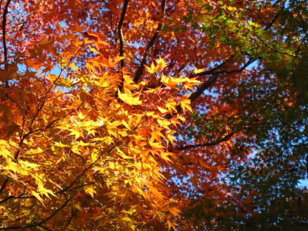 京都府立植物園20101121-8