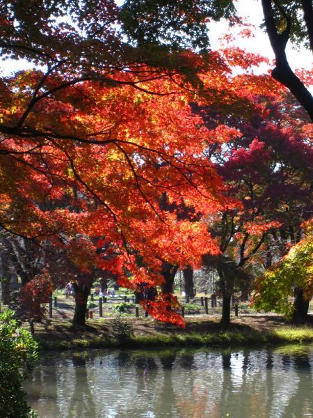 京都府立植物園20101121-9