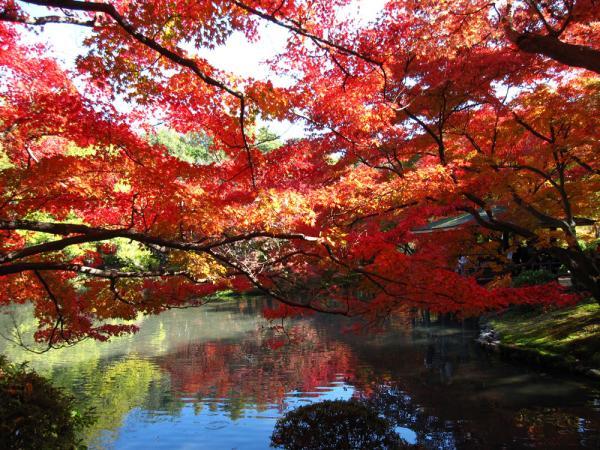 京都府立植物園20101121-10