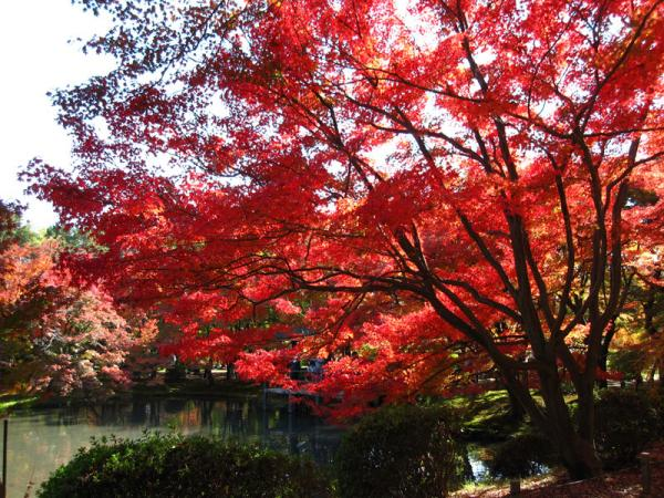 京都府立植物園20101121-11