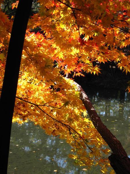 京都府立植物園20101121-12