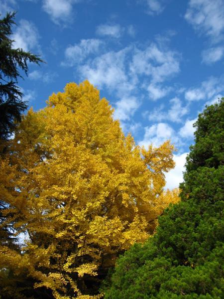 京都府立植物園20101121-17
