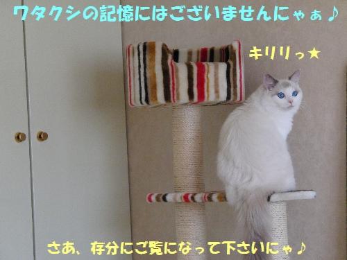 11(2).jpg