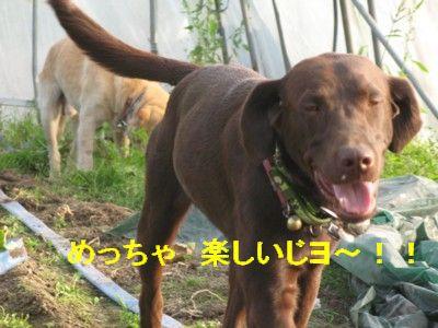 IMG_0066_20090925224448.jpg