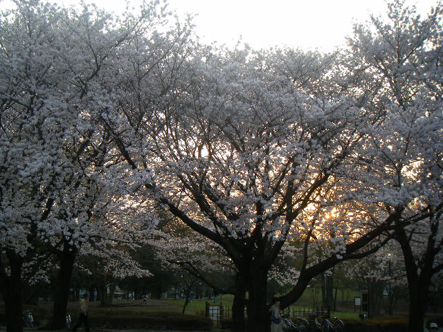2010 府中の森公園 夕方