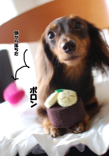 1320_20091010103602.jpg