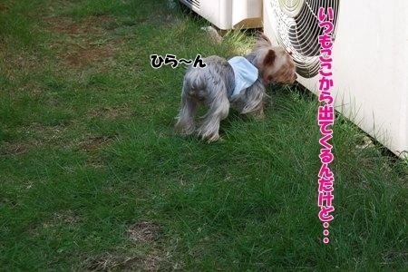 1604_20091008141106.jpg