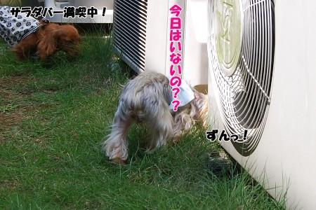 1607_20091008142154.jpg