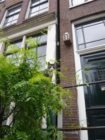 アムステルダム猫