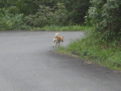 9/21 散歩中に出会った犬
