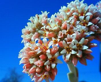 花は空の青に映える 2
