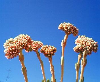 花は空の青に映える 1