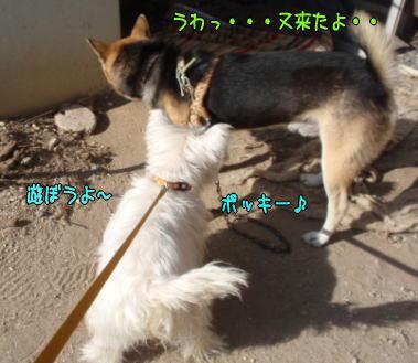 image211106a.jpg