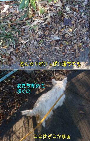 image211107.jpg