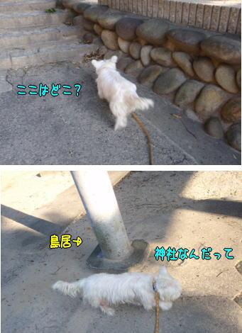 image211107a.jpg
