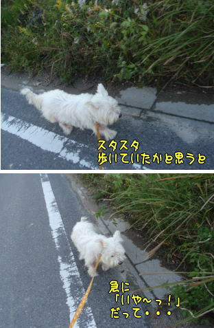 image211114.jpg