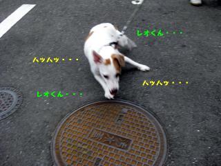 IMG_4336.jpg