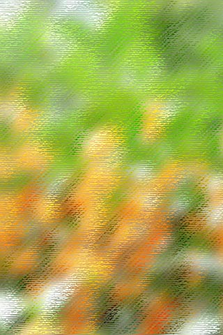 kinmokusei320.jpg